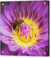 Purple And Yellow Lotus With A Bee Textured Acrylic Print