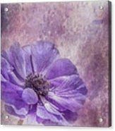 Purple Anemone Art Acrylic Print