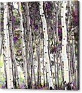 Purple Aspens Acrylic Print