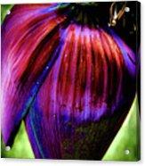 Purple Banana Pod Acrylic Print