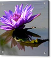 Purple Beauty On The Pond Acrylic Print