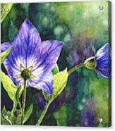 Purple Bell Flower Acrylic Print