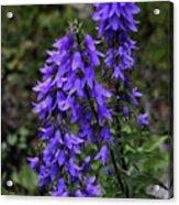 Purple Bell Flowers Acrylic Print