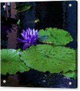 Purple Blue  Lily Acrylic Print