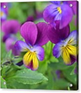 Purple Blue Yellow Acrylic Print