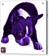 Purple Boston Terrier Art - 8384 - Wb Acrylic Print