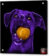 Purple Boxer Mix Dog Art - 8173 - Bb Acrylic Print