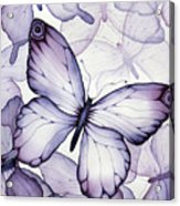 Purple Butterflies Acrylic Print