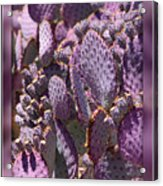 Purple Cactus Canvas Acrylic Print
