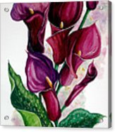 Purple Callas Acrylic Print