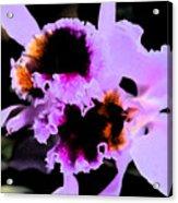 Purple Cattleya Orchid Acrylic Print