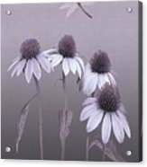 Purple Coneflowers And Dragonfly Acrylic Print