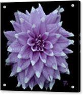 Purple Dahlia Cutout Acrylic Print