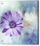 Purple Daisy Swirl Acrylic Print