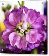 Purple Delphinium Acrylic Print