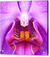 Purple Face In The Orchid. Acrylic Print