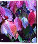 Purple Fall Leaves Acrylic Print