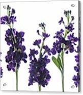Purple Floral 1 Acrylic Print