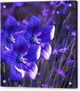 Purple Florwer Abstract Acrylic Print by Marjorie Imbeau