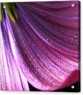 Purple Flower 1 Acrylic Print