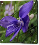 Purple Flower 2 Acrylic Print