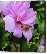 Purple Flower And Friend Acrylic Print by Guy Ricketts