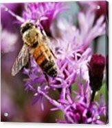 Purple Flower Bee Acrylic Print