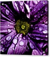 Purple Flower II Acrylic Print