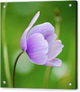 Purple Flower Looking Right Side Acrylic Print