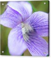 Purple Flower Macro Acrylic Print