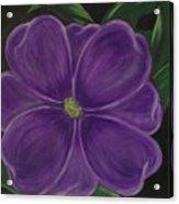 Purple Flower Acrylic Print by Melanie Blankenship