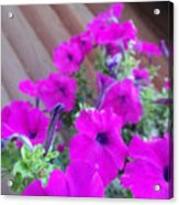 Purple Flowers 1 Acrylic Print