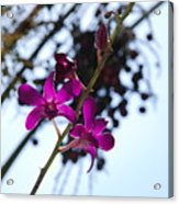 Purple Flowers In The Sky Acrylic Print
