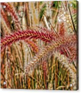 Purple Fountain Grass Abstract By H H Photography Of Florida Acrylic Print