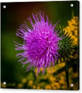 Purple Fringe Acrylic Print