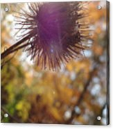 Purple Fuzzy Acrylic Print