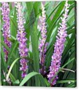 Purple Grass Acrylic Print
