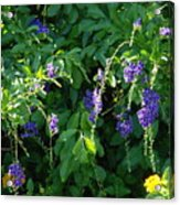 Purple Hanging Flowers Acrylic Print