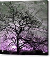 Purple Haze Across The Sky Acrylic Print