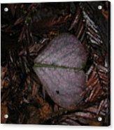 Purple Heart Shaped Leaf Acrylic Print