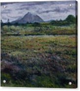 Purple Heather And Mount Errigal From Dore Co. Donegal Ireland   Acrylic Print