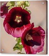 Purple Hollyhock Duo Acrylic Print