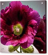 Purple Hollyhock Acrylic Print