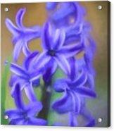 Purple Hyacinths Digital Art Acrylic Print