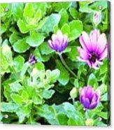 Purple In Greenery Acrylic Print