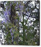 Purple In The Trees Acrylic Print
