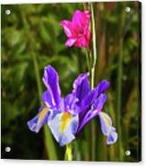 Purple Iris And Gladioli Byzantinus Acrylic Print