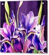 Purple Iris Dance  Acrylic Print