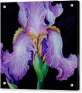 Purple Iris II Acrylic Print