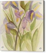 Purple Iris Watercolor Acrylic Print